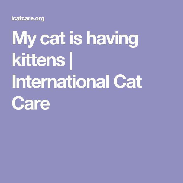 My cat is having kittens | International Cat Care