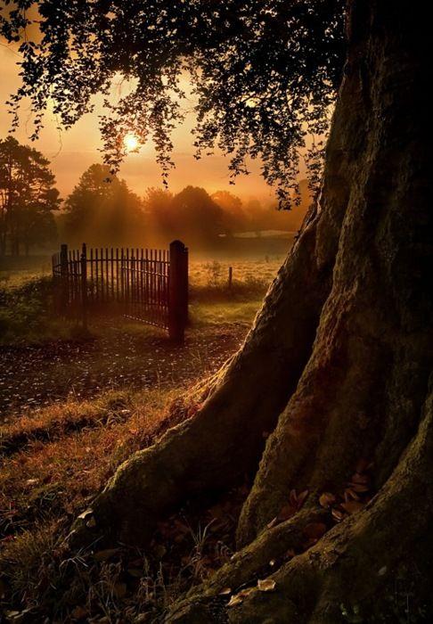 Sunset Gate, IrelandTrees Trunks, Nature, Peace Places, Secret Places, Sunsets Gates, Beautiful, Sunris, Northern Ireland, Photography