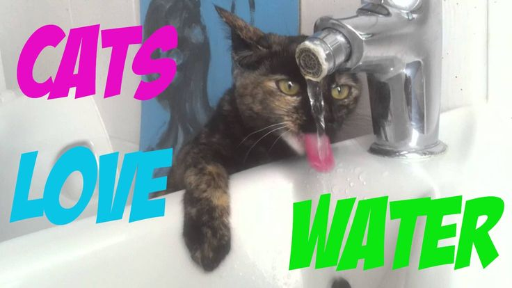 Funny Cats Love To Drink Water From The Sink - Funny Water Cats Compilat...