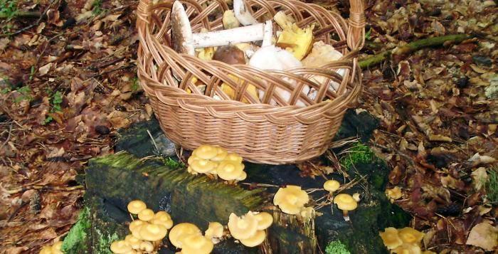 Šumavské houby známé i neznámé