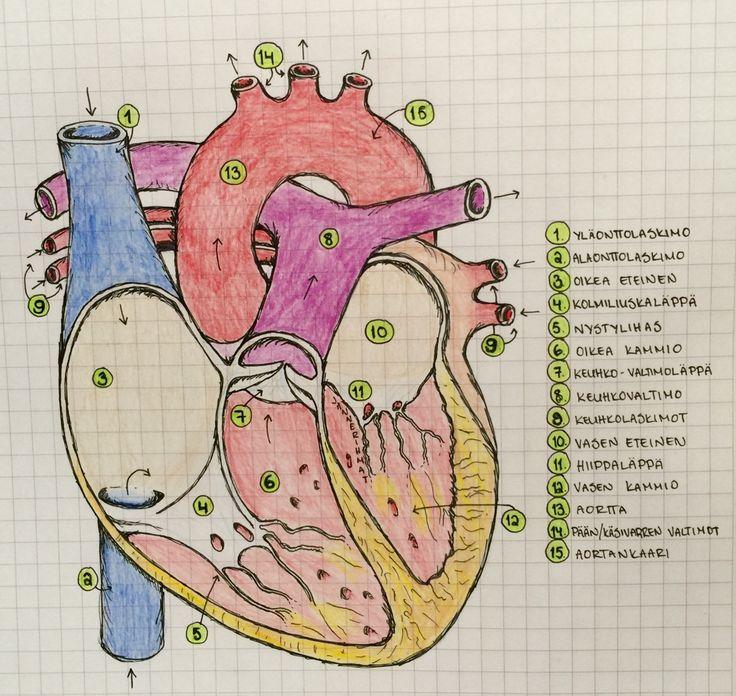 ChA Biology Notebook