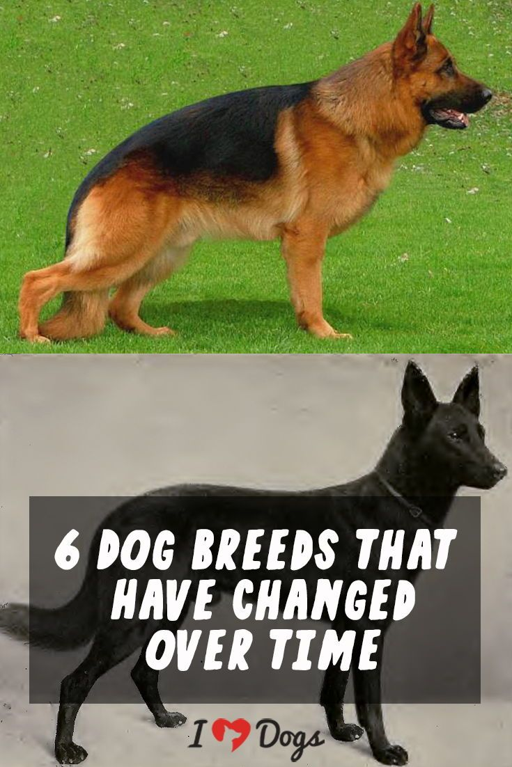 How 6 Dog Breeds Have Changed Over Time