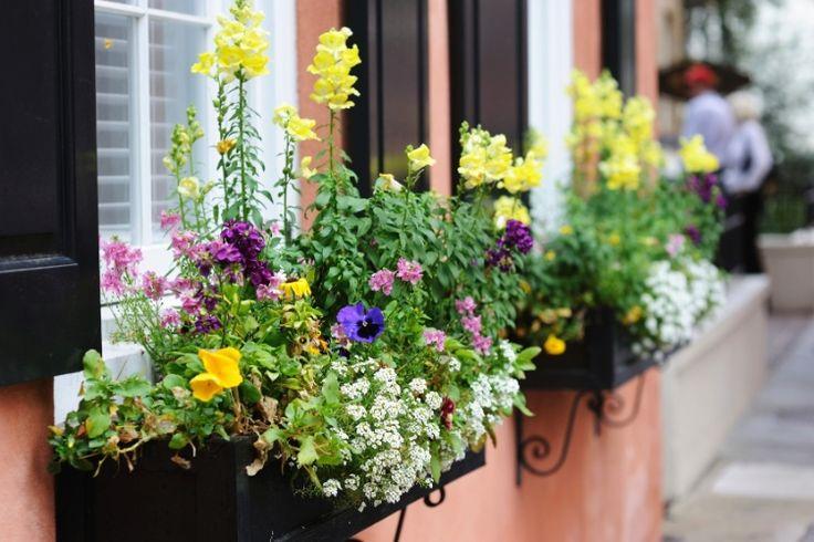 Flores e folhagens de diversas espécies podem compor floreiras lindas, bem como um desses recipientes pode abrigar uma bela hortinha. Seja na varanda, na janela ou num cantinho da cozinha, que tal criar um 'oásis' natural em casa?
