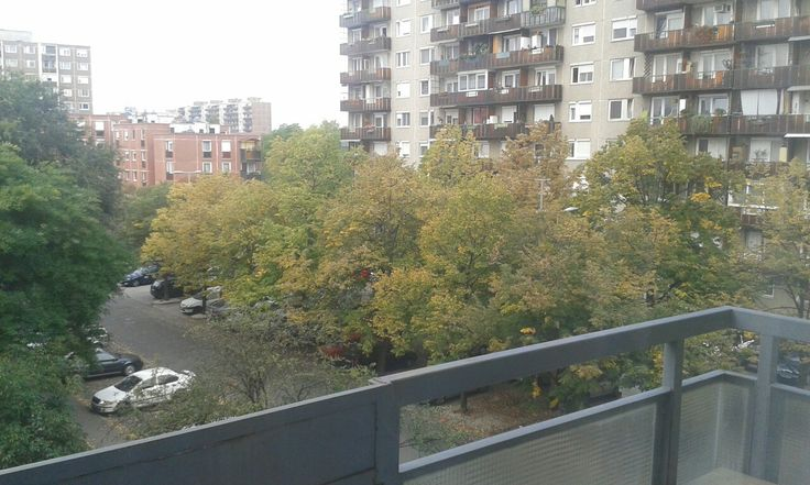 The leaves have started changing colours...it has begun...