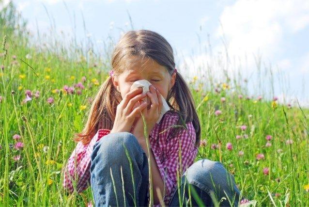 Slecht nieuws voor wie allergisch is aan berkenpollen - Het Nieuwsblad: http://www.nieuwsblad.be/cnt/dmf20170327_02802094?_section=11866559