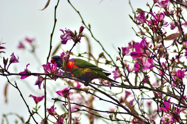 Beautiful bird in tree