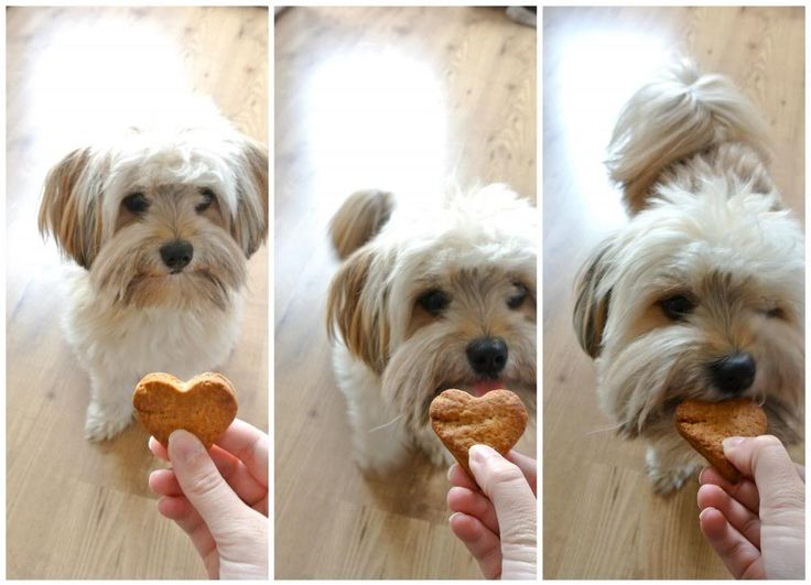 Honden- en kattenkoekjes - Lekker en Simpel