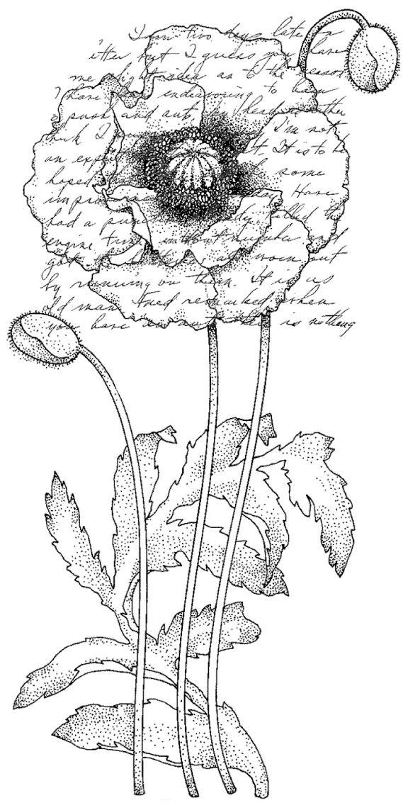 Penny Black Rubber Stamp 2.25 Inch X 4 Inch-Poppy Poem