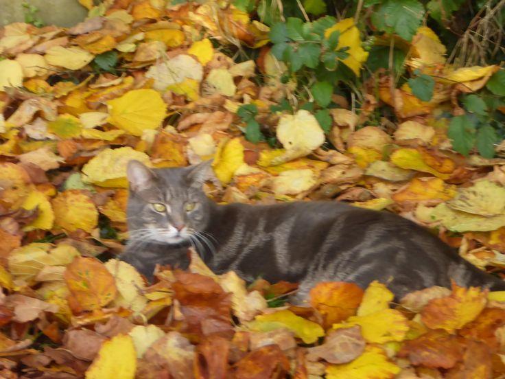 Reggie again.  Look how his eyes match the leaves!