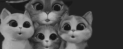 imagenes gif de animales tiernos tumblr - Buscar con Google