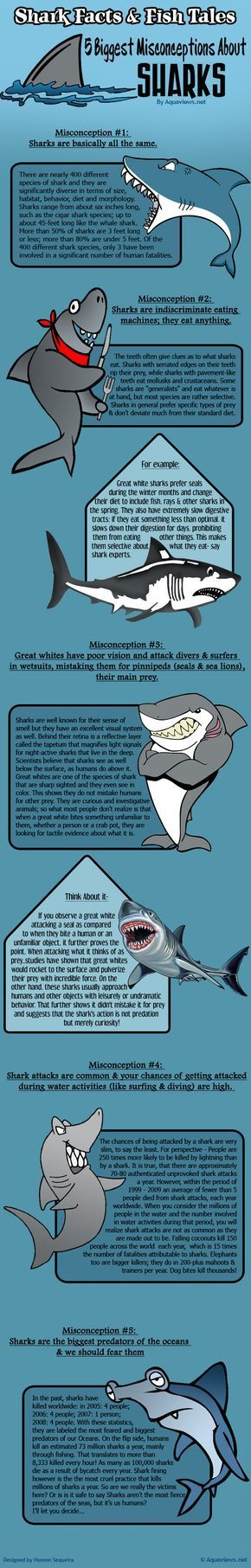 #GoEco #volunteerabroad Shark Facts And Fish Tales: 5 Biggest Misconceptions About Sharks