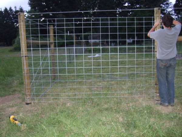 cattle fencing | Lee wired the two cattle panels together with wire and let them ...