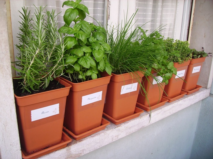 Lovely Outdoor Windowsill Herbs.