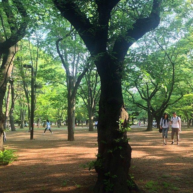 """sweetest day of May"" Yoyogi park"