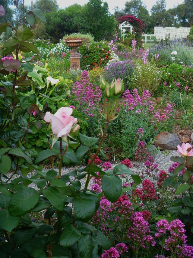 Garden Ideas Victoria Australia garden ideas victoria australia - garden ideas victoria australia