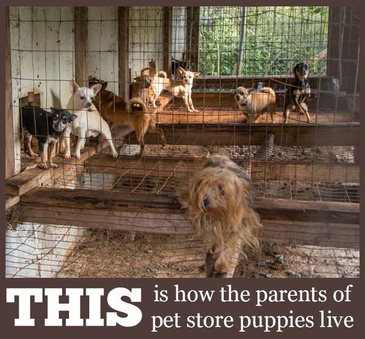 Spread the word. Don't purchase a puppy from a pet store or this is what you are supporting. #adoptdontshop #rescue