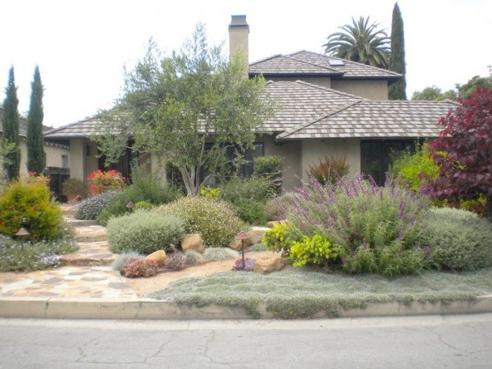drought tolerant yard with olive trees - Google Search