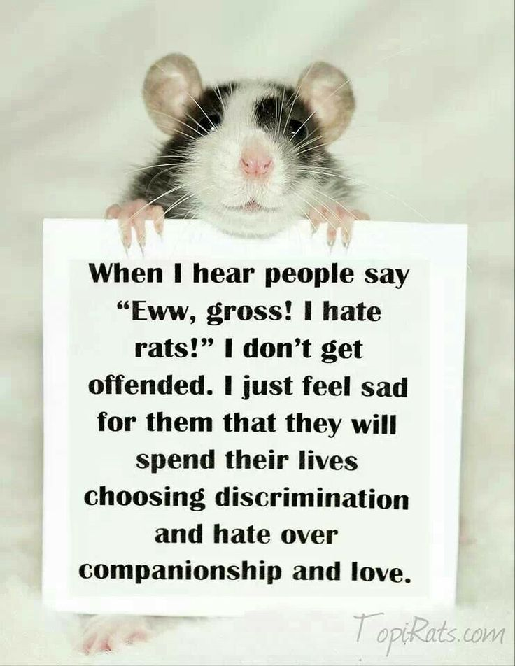 Must love rats