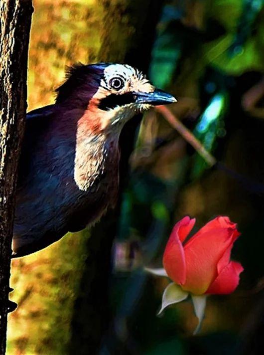 Gece, gül bahçesinde ararken seni,  Gülden gelen kokun sarhoş etti beni;  Seni anlatmaya başlayınca güle  Baktım kuşlar da dinliyor hikayemi.  ~ Ömer HAYYAM