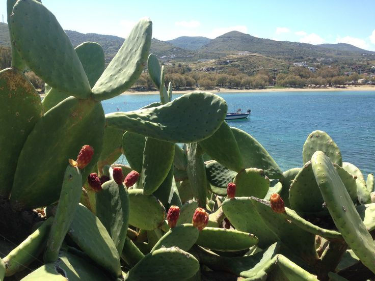 #indianfig #kea #greece #nature #plants #tastyfruit #spring