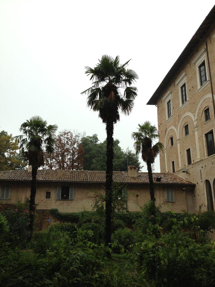 Urbino IT.