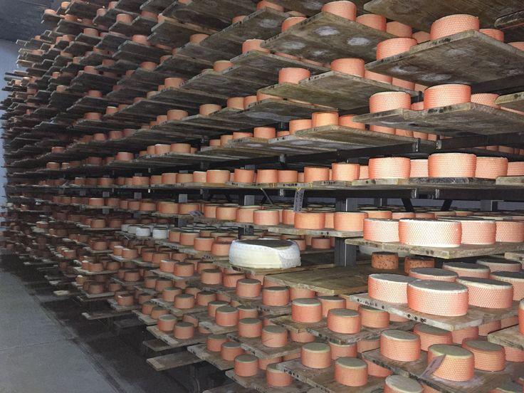 cámara de maduración de Tortas de la Serena y Cremositos del Zújar