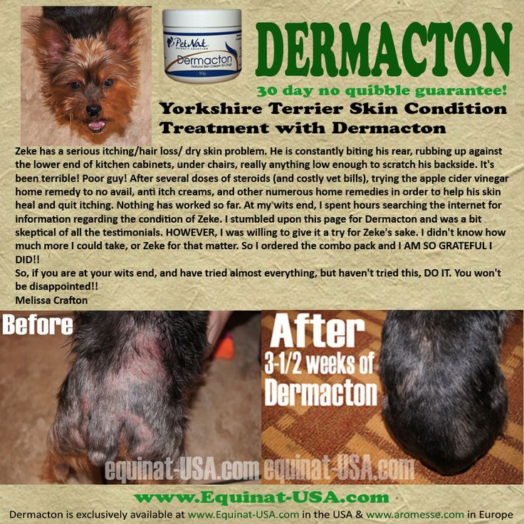 127 Best Natural Treatment Canine Dermatitis Images On