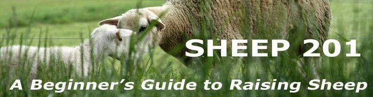 Sheep 101 logo