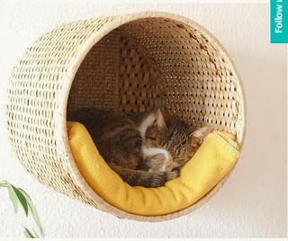 .Here's a neat idea.  hang a sturdy basket to the wall for a cat bed.