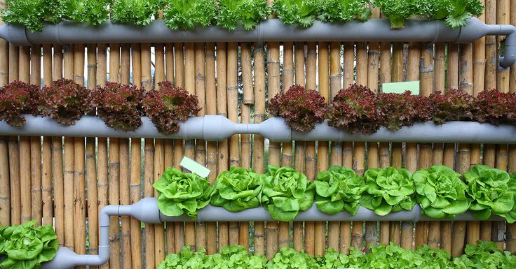 Can this modern cultivation practice of growing plants in a closed environment meet our food demands in a more sustainable way?   https://www.honeycolony.com/article/vertical-farming/?utm_campaign=coschedule&utm_source=pinterest&utm_medium=HoneyColony&utm_content=Vertical%20Farming%3A%20The%20Future%20of%20Agriculture%3F