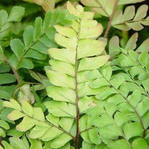 1000 ide tentang plantas de interior resistentes di for Plantas hoja perenne
