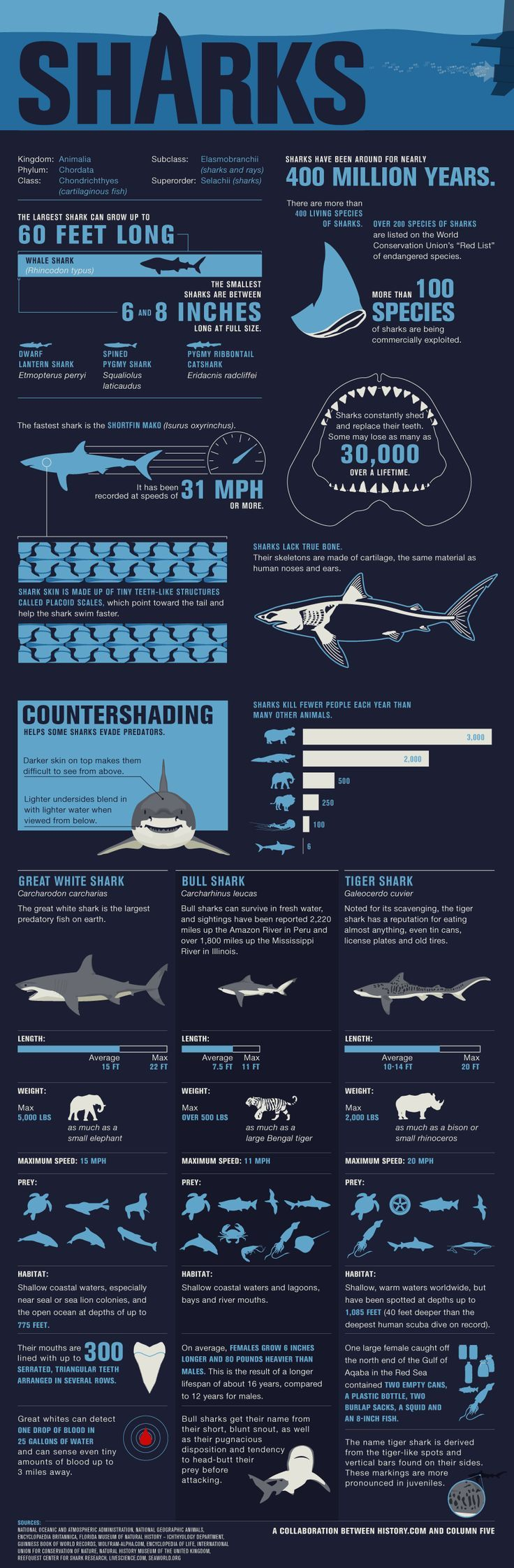 Sharks FAQ sheet - Comprehensive shark guide.  Know your sharks! ♥ Want to scuba dive all the time?  Try This Simple System That Helped me see some amazing dives and marine life:  https://successrx.leadpages.net/pt-scubadiving/    #scuba #diving #sharks http://www.deepbluediving.org/best-scuba-diving-mask-reviews/