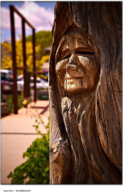 Best images about tree carving on pinterest trees a