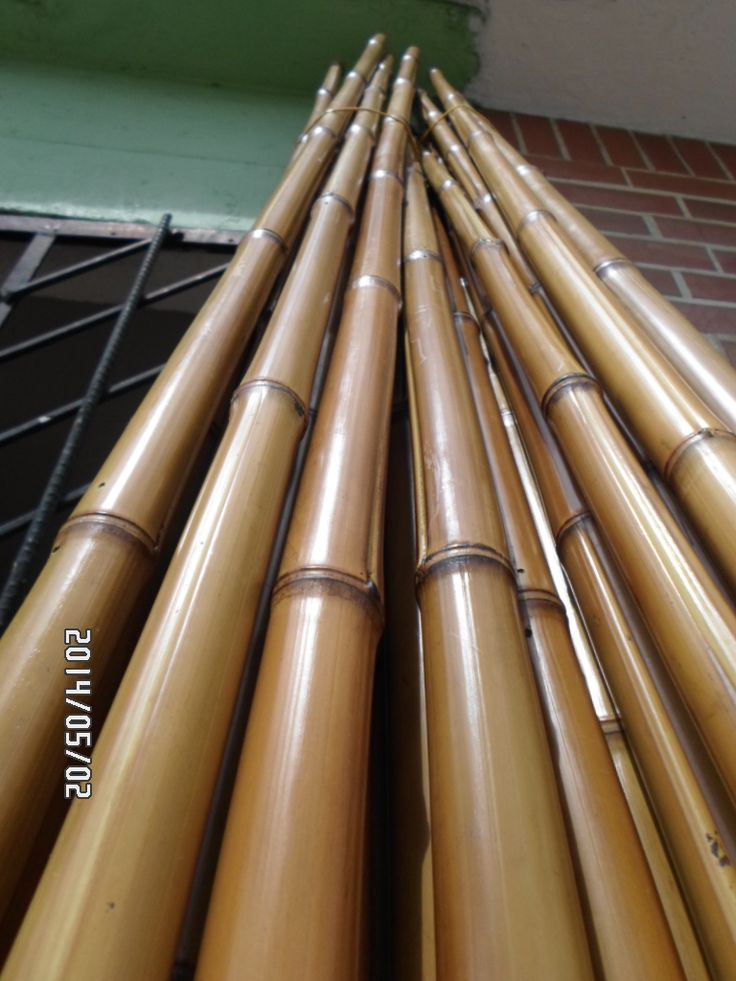 Tenemos bambu Phyllostachys aurea inmunizado y al natural a $2500 cada metro (valor 2016) mas información´+57-3178149055