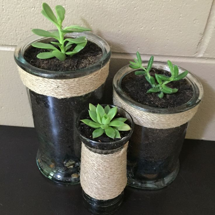 Succulents from Bunnings planted in jars that I decorated with twine. They have river rocks in the bottom to help drain the excess water & a layer of charcoal after that. Then filled with soil & sand and done!! :)