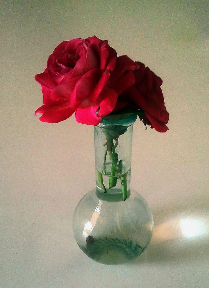 rose rosse in vaso