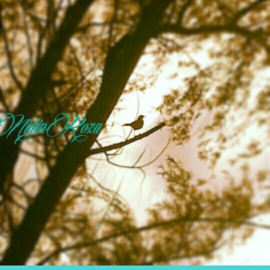 Un pájaro posado en un árbol nunca tiene miedo que la rama se rompa, porque su confianza no está en la rama sino en sus propias alas.