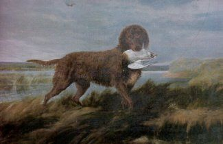 """❤ =^..^= ❤    Tweed Water Spaniel: Extinct since the 19th century, the Tweed Water Spaniel is most known for being the predecessor of the modern Golden Retriever. They were described as generally brown, athletic water dogs, """"certainly retrieverish, and not at all spanielly."""""""
