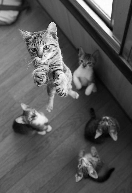 OMG, KITTIES!!