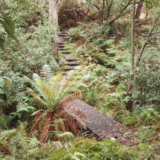 Hinterland Walks | The Official Website of Mornington Peninsula Tourism