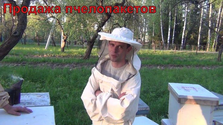 Продажа пчелопакетов Бакфаст Начинающему пчеловоду. Советы начинающему п...