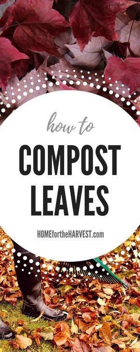 Exactly how to compost your leaves to make the highest-quality compost. Composting leaves is a great way to clean up your yard in the fall while also making your own organic plant food. | Home for the Harvest #gardening #compost #composting #organicgarden