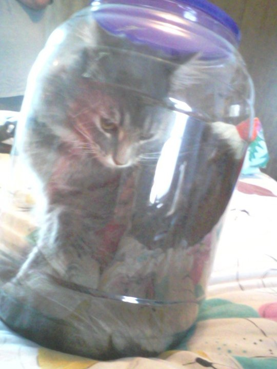 Charlie in a cheese ball jar.  For some reason he didn't like it.