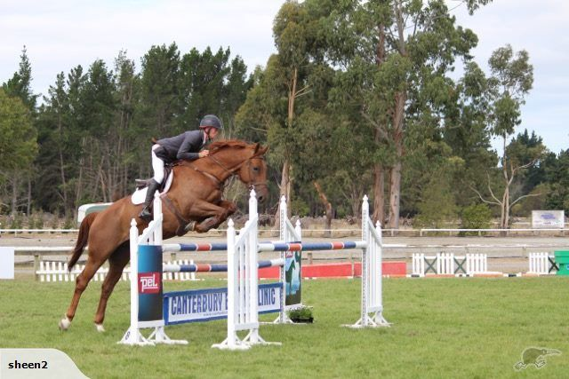 http://www.trademe.co.nz/sports/equestrian/horses-ponies/horses/auction-967819662.htm