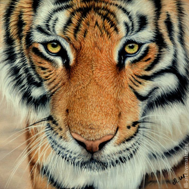 Купить картина пастелью Взгляд тигра - тигр, взгляд, пастель, картина, картина с тигром, рыжий