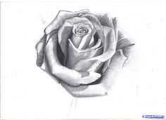 How to Draw a Rose In Pencil, Draw a Realistic Rose, Step by Step ...