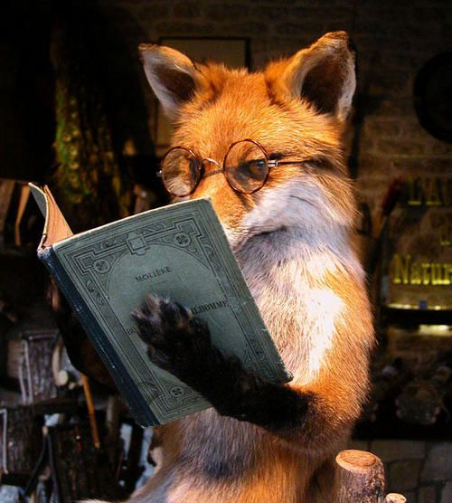 : All Things Foxes, Reading Foxes, Philippe Gillott, Reading Molier, Artists Unknown, Foxes Books, Foxes Reading, Foxy, Animal