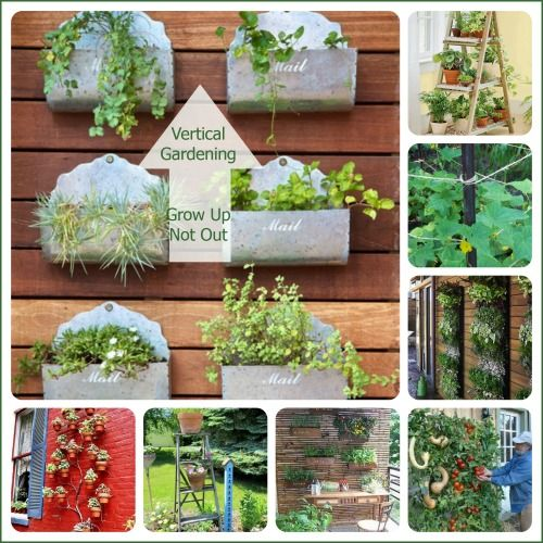 17 Best Images About Unusual Planters And Gardening Ideas
