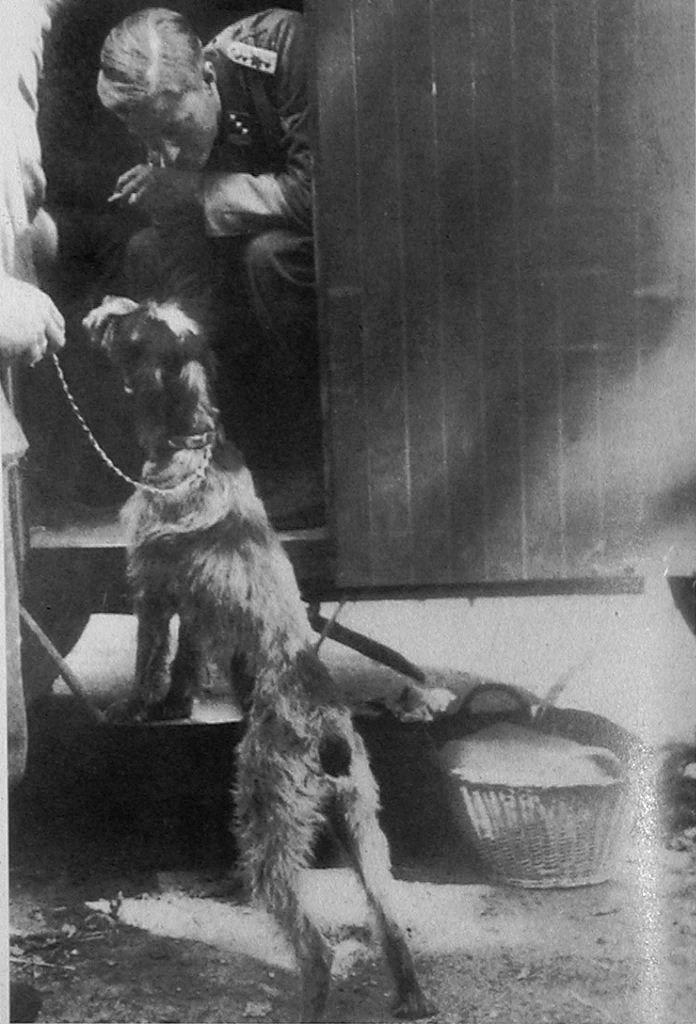 Joachim Peiper with Sepp Dietrich's dog, Juny 1940, France