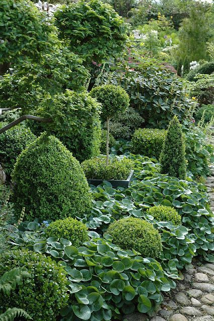 Shade garden of evergreens and lots of hostas